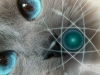 gatto_quantistica_light