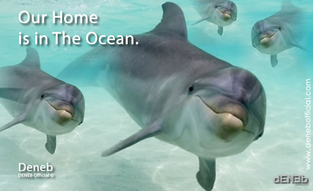 deneb_dolphins_home