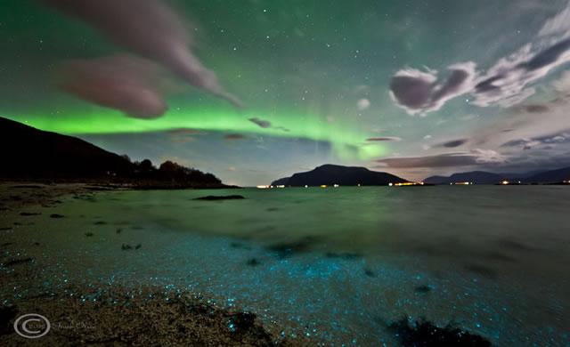 Aurora e dinoflagellati: la bellezza e le luci della natura - Auroras and Dinoflagellates