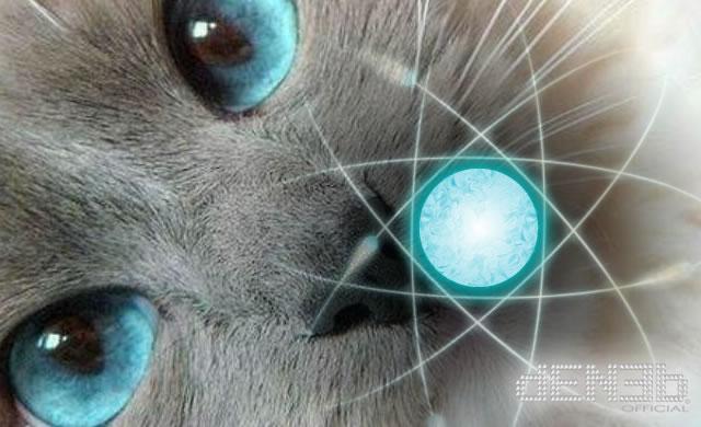 Fisica Quantistica: Il gatto di Schrödinger ha un tocco gentile - Quantum Physics: Schrödinger's Cat Has a Light Touch
