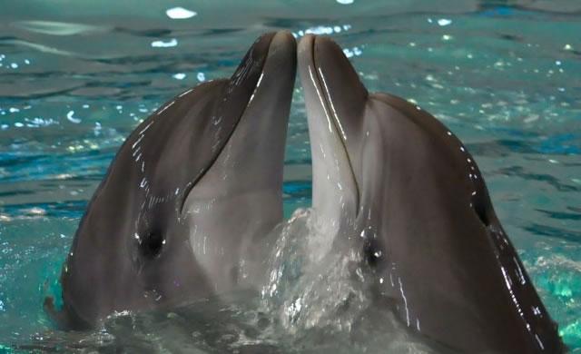 I delfini comunicano