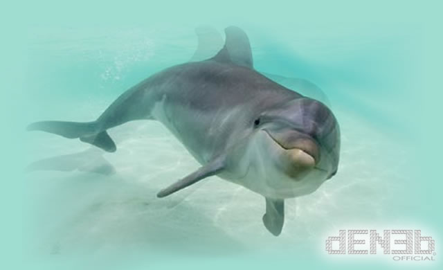 I Delfini mantengono una Memoria Sociale per tutta la Vita, la più lunga in una Specie Non Umana - Dolphins keep lifelong social memories, longest in a non-human species