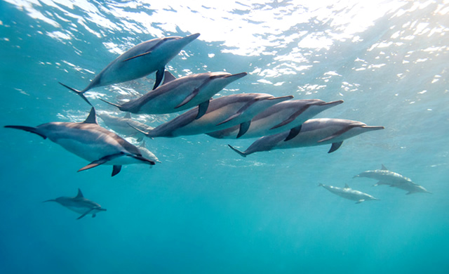 Studio: I Delfini Risolvono i Problemi come gli Umani - Study: Dolphins can problem solve like Humans
