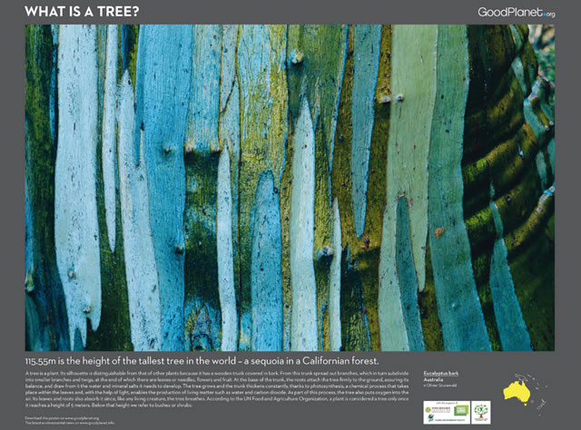 Pianeta Terra: Le Foreste e l'Uomo - Planet Earth: Of Forests and Men