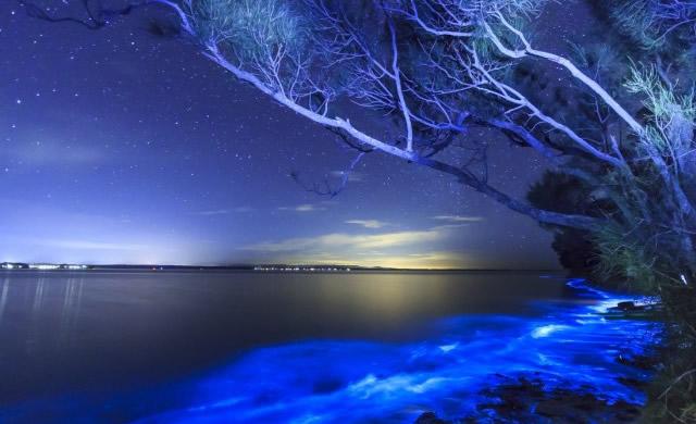 Bioluminescenza: Stelle ovunque! - Bioluminescence: Stars Everywhere!