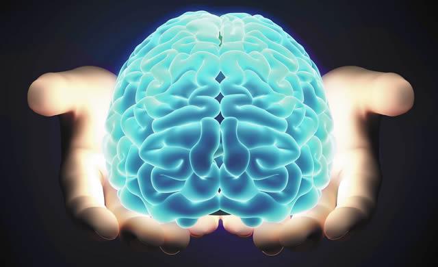 L'Evoluzione del Cervello Umano E' Stato Un Evento Speciale - Human Brain Evolution Was a Special Event