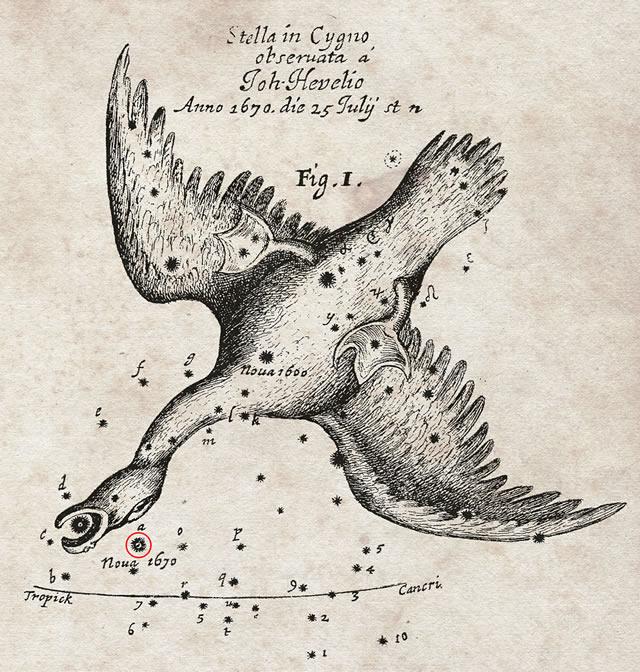 Costellazione del Cigno 1670 - Cygnus Constellation