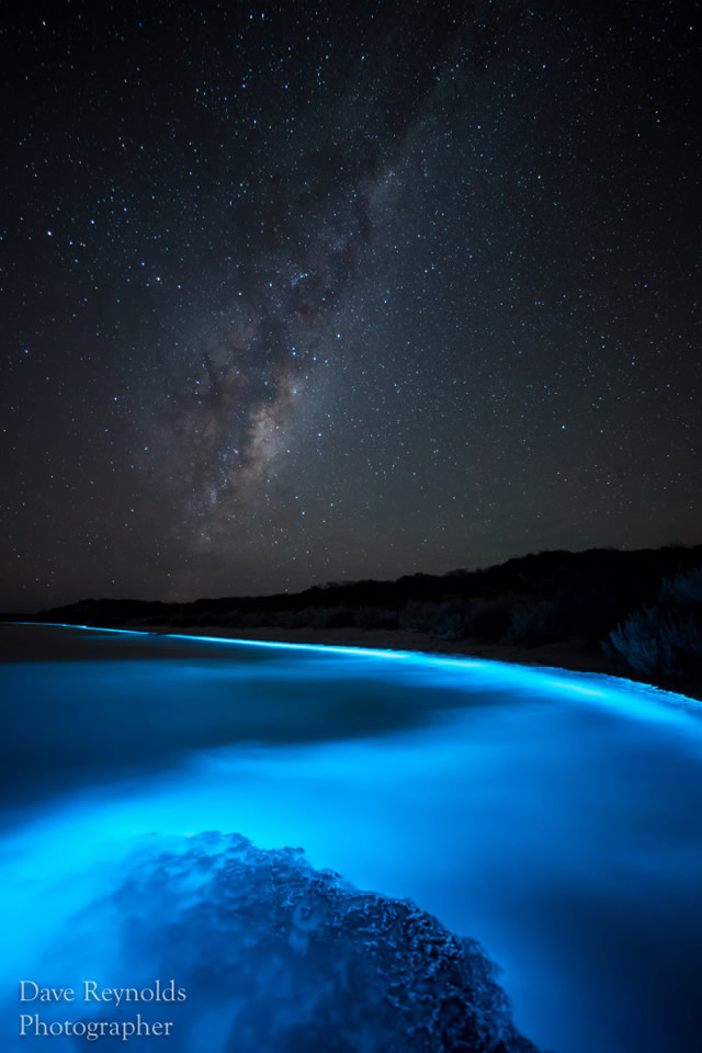 Bioluminescenza nelle acque in Tasmania - Sea Sparkle – Extreme Bioluminescence In Tasmanian Waters
