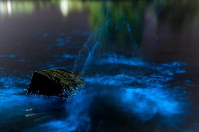 Estrema Bioluminescenza nelle acque in Tasmania - Extreme Bioluminescence In Tasmanian Waters
